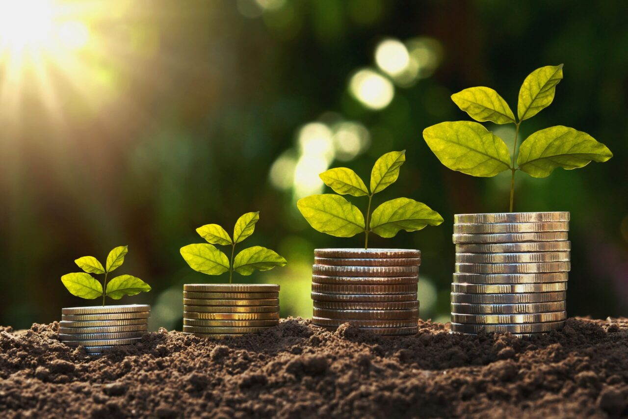 https://doradcy365.pl/wp-content/uploads/2020/10/concept-finance-accounting-growing-young-plant-coins-with-sunrise-min-scaled-1280x854.jpg