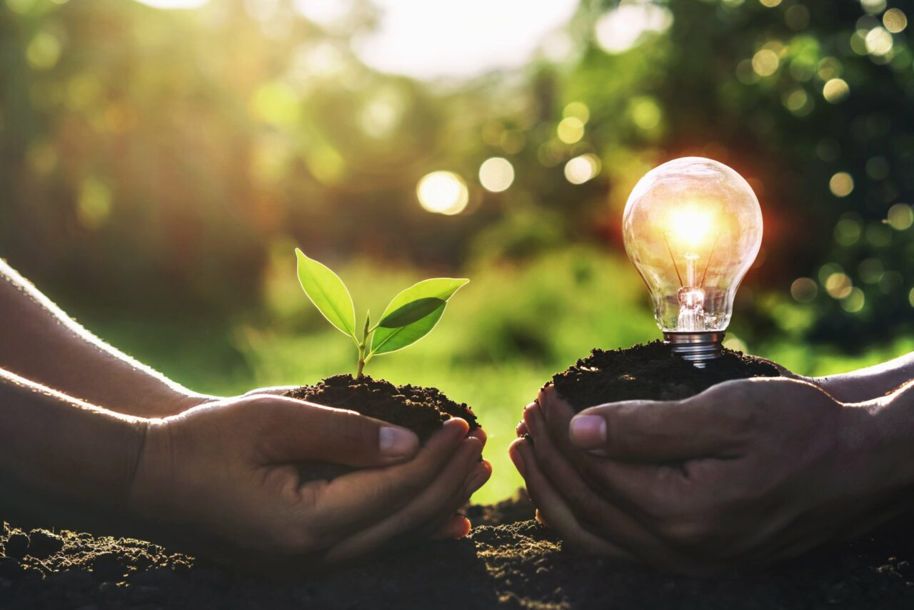 https://doradcy365.pl/wp-content/uploads/2020/10/hand-holding-young-plant-with-light-bulb-dirt-sunset-min-scaled-1280x854.jpg